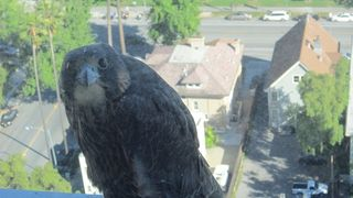 San jose city hall falcon 4