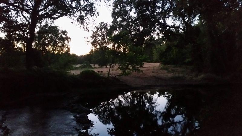 Owl prowl chico creek nature center